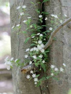 DIY & Self Sufficiency: How to Identify Four Common Edible Plants.