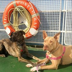 We guarantee that your four-legged family members will love the ferry as much as you do! Prince Edward Island, Nova Scotia, Four Legged