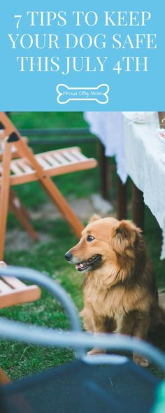7 Tips To Keep Your Dog Safe This July 4th | July 4th Safety | Dog Health Tips |