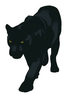 Way Past Normal: The North American Black Panther – Myth or Reality?
