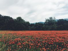 Italian maaseutu - Toscana, Firenze, Umbria ja Tivoli kuvina