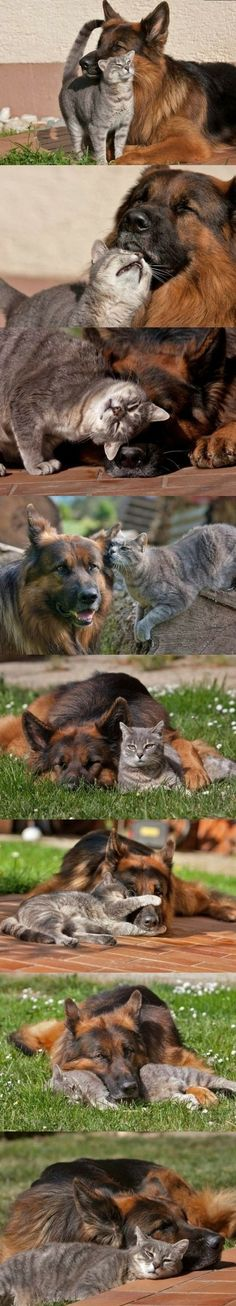 Friends, best friends. :3 - Click image to find more Animals Pinterest pins
