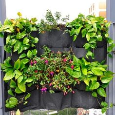 12 Pocket Hanging Vertical Pot Herbs Garden Wall Planters Bag For Outdoor Garden. Perfect for creating a bright feature wall or vertical herb garden. Garden Wall Planter, Living Wall Planter, Vertical Garden Planters, Hanging Wall Planters, Flower Planters, Vertical Gardens, Garden Walls, Hanging Plants, Cheap Planters