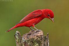 colourful birds - Google Search