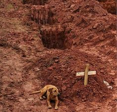 Dog on grave in Rio de Janiero - Vanderlei Almeida/Courtesy of Purple Clover.Leao sits for a second consecutive day at the grave of his owner, who died in a devastating landslide in Rio de Janiero.