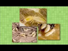 Pest Quest - Season 1, Episode 6. Power in numbers, pill bugs on a roll and ticked off! #kids #bugs