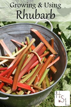 Early homegrown produce can be tough to find in the northern climates which means we need to be growing & using rhubarb for perennial harvests.