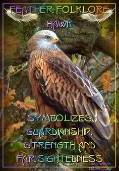 The Hawk: Feather Folklore Spirit Animal Totem, Animal Spirit Guides, Animal Totems, Animal Meanings, Animal Symbolism, Folklore, Feather Meaning, Hawk Feathers, Spiritual Animal