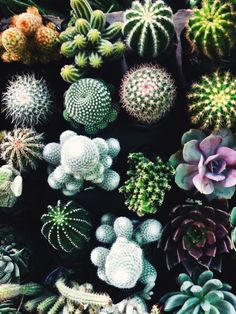 love cacti and succulents! plants, container gardening, just a pretty picture