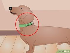 How to Make a Dog Coat (with Pictures) - wikiHow Dog Coat Pattern, Coat Patterns, Dog Coats, Dog Accessories, Scooby Doo, Arts And Crafts, Birds, Doggies, How To Make