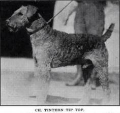 CH Tintern Tip Top, Father of Laddie Boy 1920