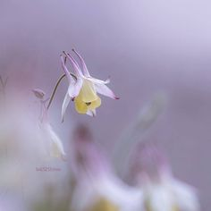 """좋아요 1,364개, 댓글 11개 - Instagram의 Flowers feature(@bns_flowers)님: """"flower shot of the day  Artist : @bell1212snow  Congratulations :    ~ ~ ~ ~ ~ ~ ~ ~ ~ ~ ~ ~ ~…"""""""
