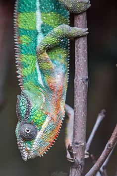 I'm a chameleon, normally, he should not see me... by Seb-Photos on deviantART