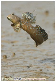 Rocket Mud Skipper - Canon Digital Photography Forums.... You mean muddy the mud skipper from ren and stimpy