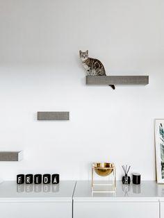 Dog Furniture, Furniture Design, Cat Room, Dog Houses, Pet Supplies, Koti, House Design, Cat Stuff, Eames