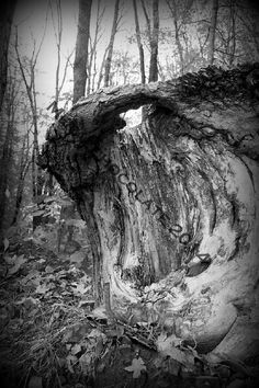 Old Tree Stump Original Digital Photo by MetalChocolate on Etsy, $10.00