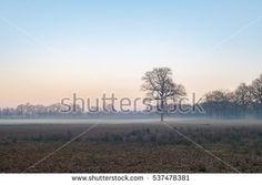 Solitary bare tree in misty field during winter. Nature reserve Needse Achterveld. Gelderland. The Netherlands.