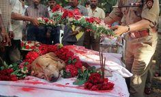 Zanjeer, o cão salvou milhares de vidas durante Mumbai explosões em série em Março de 1993 por meio da detecção de mais de 3.329 kg do explosivo RDX, 600 detonadores, 249 granadas e 6.406 cartuchos de munição. Ele foi enterrado com todas as honras em 2000.