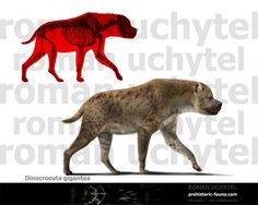 Dinocrocuta, a giant member of the hyena family from the Miocene to Pliocene.