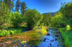 Visit Greer, Arizona To Be Surrounded By Natural Beauty