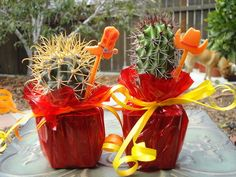 Mini CACTUS PLANT PARTY FAVORS FOR TEX MEX FIESTA