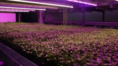Commercial Greenhouses May Be The Future of Urban Farming In Chicago — Free Spirit Media Agriculture Industry, Urban Agriculture, Chicago Location, Commercial Greenhouse, Grow Home, Urban Farmer, Greenhouses, Hydroponics, Free Spirit