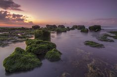 The moss by Wayan Sujana on 500px