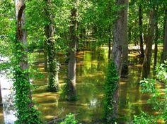 des arbres dans l'eau jpg