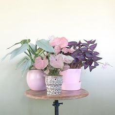 fairytale set up for . And above all, watch with glittering eyes the whole world around you because the greatest secrets… Potted Plants, Garden Plants, Indoor Plants, Indoor Cactus, Cactus Plants, Vegetable Garden, Plantas Indoor, Deco Rose, Belle Plante