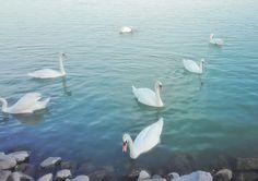 Bird, Pictures, Animals, Animais, Animales, Photos, Animaux, Birds, Photo Illustration