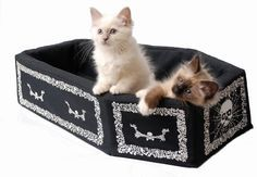 Coffin cat bed. The ideal Goth gift!