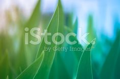 Plant abstract background royalty-free stock photo