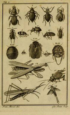 Vincentii Petagnæ...Institutiones entomologicae. - Biodiversity Heritage Library
