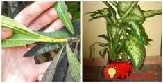 Postřik proti muškám Gardening, Plants, Lawn And Garden, Plant, Planets, Horticulture