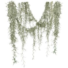 Angie's Spanish Moss ❤ liked on Polyvore featuring plants, flowers, nature, moss and foliage
