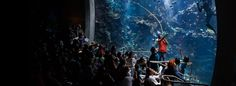 Dive into the Aquarium. 38,000 live animals, 900 species, one of the most biodiverse aquariums in the world.