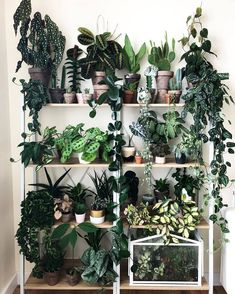 Indoor Vertical Gardening Tips and Ideas Organic gardening isn't always about food to eat. Some people enjoy growing flowers and other forms of plant life as well. You can grow anything bereft of harmful chemicals as long as you're d Room With Plants, House Plants Decor, Plant Decor, Big Plants, Indoor Garden, Garden Plants, Fence Garden, Plant Aesthetic, Plants Are Friends