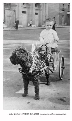 AMAZING!!! Perro de Agua Deportivo: Una foto histórica: Perros de agua de tiro