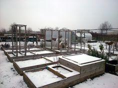 My allotment garden, winter 2016-17.  Mijn volkstuin in de winter 2016-17.
