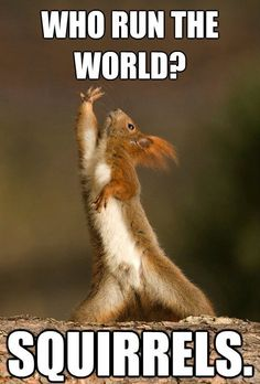 Squirrel Allmighty