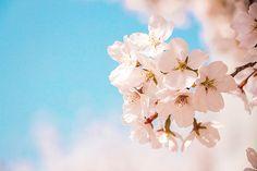 클립아트코리아 - 통로이미지 Stud Earrings, Clouds, Flowers, Outdoor, Jewelry, Outdoors, Jewlery, Jewerly, Stud Earring