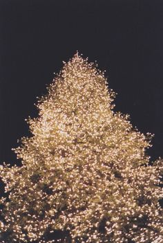 Christmas tree covered in white lights ~ against the night sky...Ah, The Pretty Things
