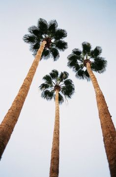 Palm trees from a low viewpoint | perspective and lead in lines | composition in photography