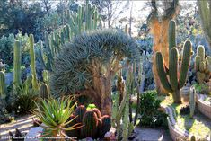Succulents and More: Aloe wonderland at Jurupa Mountains Discovery Center in Southern California