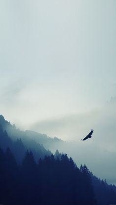 Bird-Flying-Over-Foggy-Forest-iPhone-6-Plus-HD-Wallpaper1