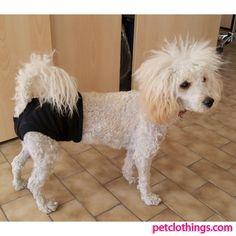 Black Pants slip for dog