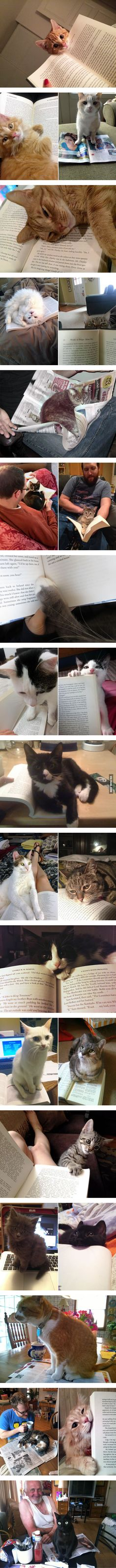 25 Cats That Have No Intention of Letting You Read