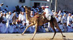 Zwischen Oktober und März werden fast jede Woche vor allem in den omanischen Regionen Al Batinah und Ash Sharqiyah Kamelrennen ausgerichtet.
