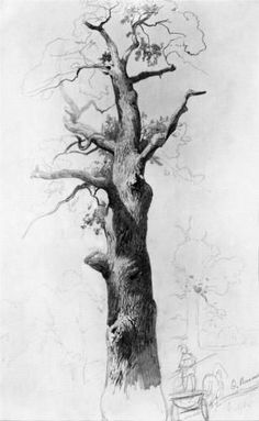 59 Ideas Tree Trunk Drawing Pencil For 2019 Tree Trunk Drawing, Tree Drawings Pencil, Drawings Of Trees, Branch Drawing, Tree Sketches, Drawing Sketches, Sketching, Academic Drawing, Nature Sketch