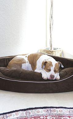 Corner Lounger Pet Bed.